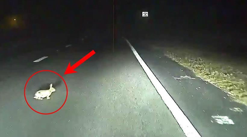 Автопілот Tesla запобіг наїзду на кролика